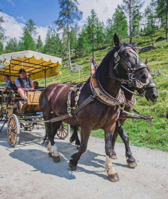 horse-drawn carriage ride to the Pony meadows in Gontal